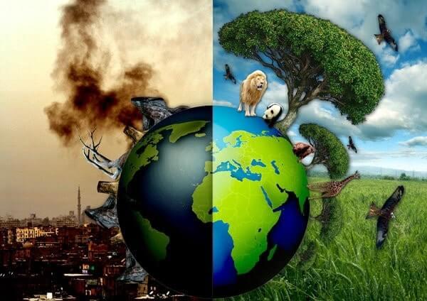 Ô nhiễm môi trường gây tác động xấu đến hệ sinh thái