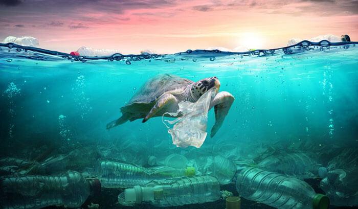 Rùa biển đang vô tình ăn phải túi nhựa nilong