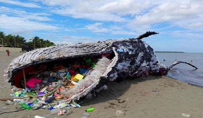 hình ảnh một con cá to ăn phải hàng trăm, hàng nghìn chai nhựa vào bụng